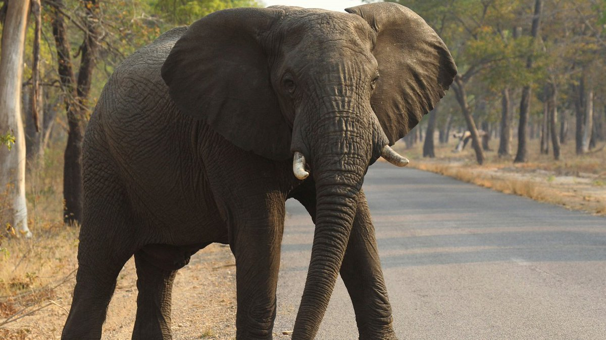 Big game hunter dies after being trampled by elephant in Zimbabwe