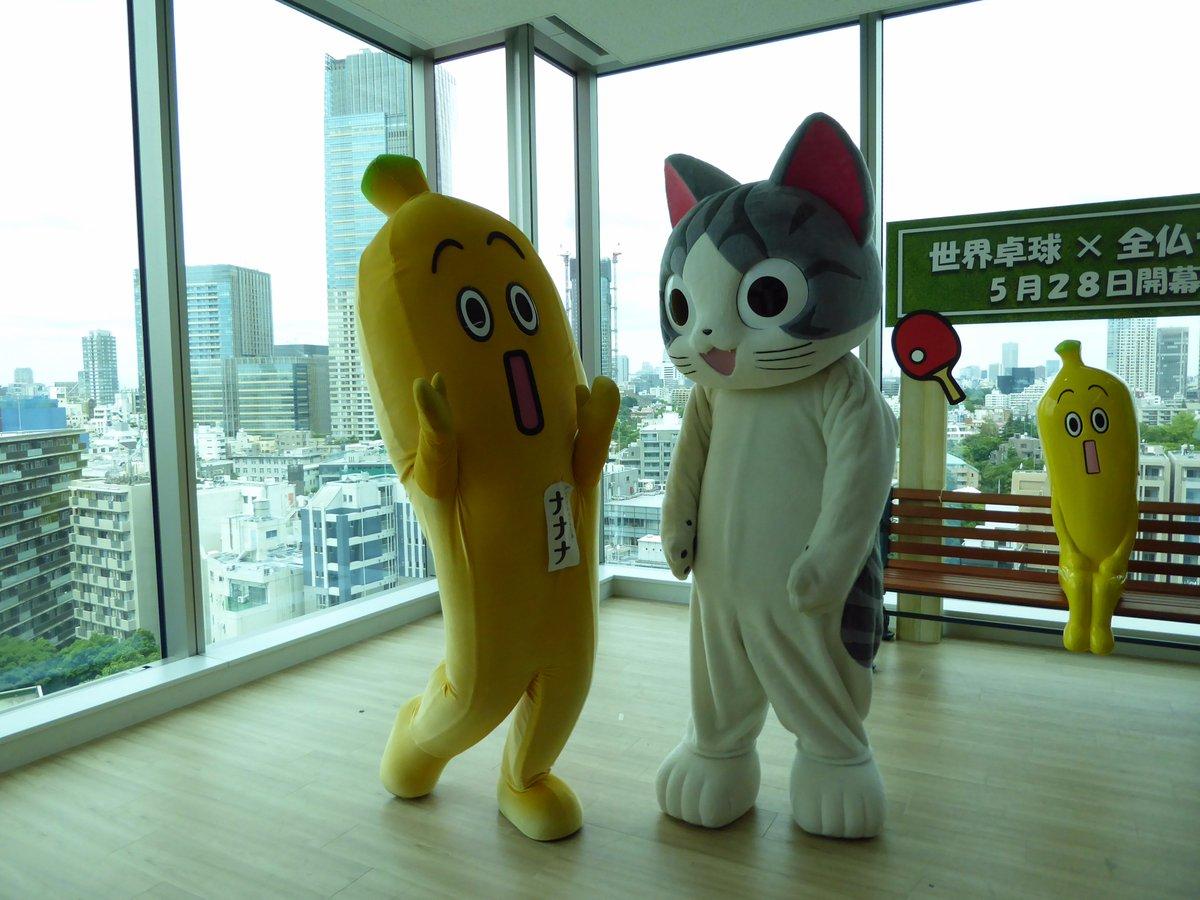 """""""わぁ~久しぶり!!""""『こねこのチー』のチーと、再会!!#テレビ東京 #ナナナ #こねこのチー"""
