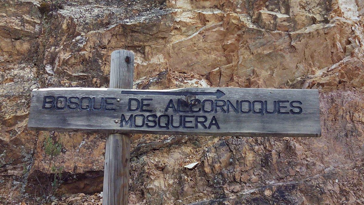 RT @Javier_Uxo: Bosque de alcornoques. Valle Mosquera. Sierra de Espadán. #Almedíjar. #Castellón. https://t.co/EI4jRDCk5G