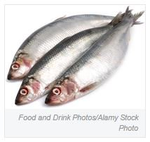 test Twitter Media - Online: #ResearchHighlight: #Fish-derived #fatty acids protect against #T1DM-associated #autoimmunity https://t.co/SApBhdY3BZ #diabetes #T1D https://t.co/k6x57UuIMV