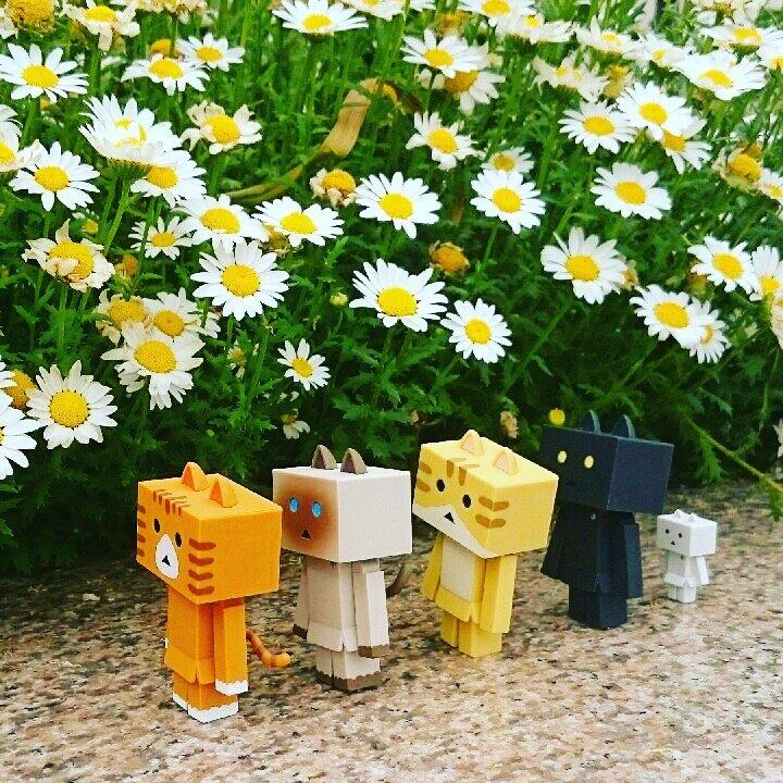 春の行進#ダンボー#ニャンボー#にゃんぼー#danbo#nyanbo#花#flower