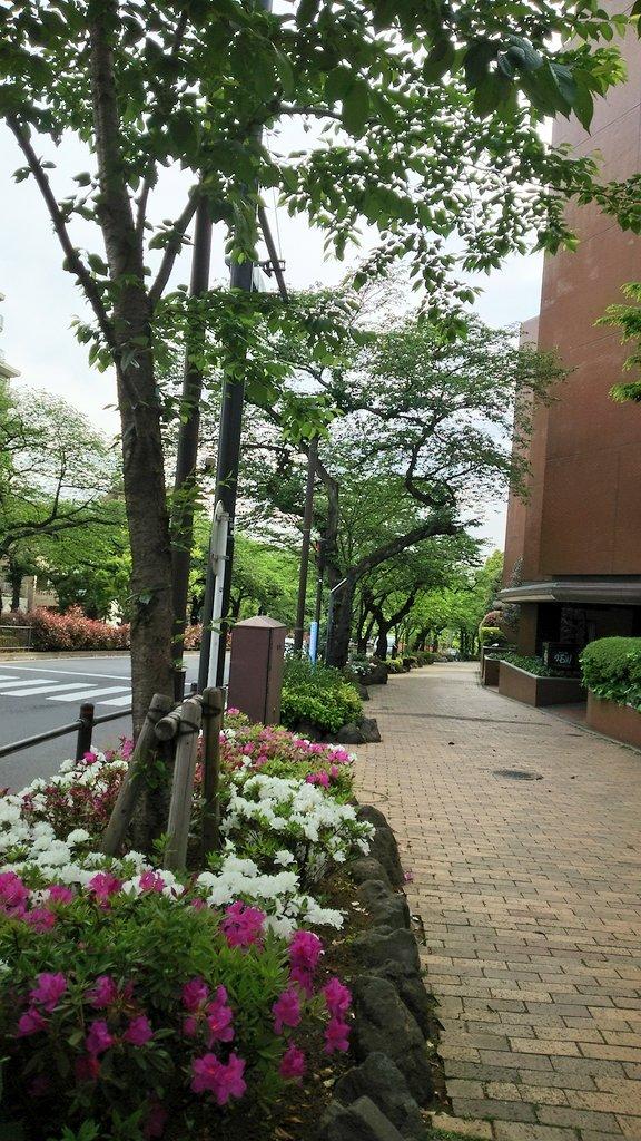 「里見八犬伝」青森公演お疲れ様でした!残すは仙台。そして東京凱旋で丸山敦史さんの大角様に再び会える日まで一週間です。最後