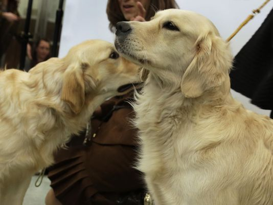 Mich. Senate votes to allow dogs on restaurant patios