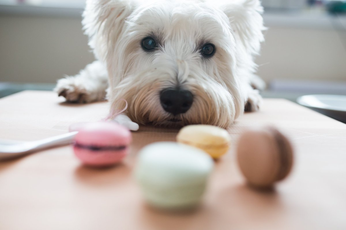 RT @Petco: #DidYouKnow that dogs have a sweet tooth, but cats do not? https://t.co/srnXZMen5Q