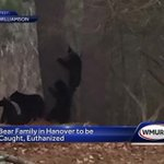 Family of bears in Hanover to be caught, euthanized