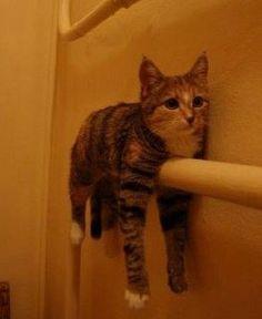 test Twitter Media - RT @TreasuryMog: Or pretend to be a towel #TowelDay https://t.co/m1pCBuJRJQ