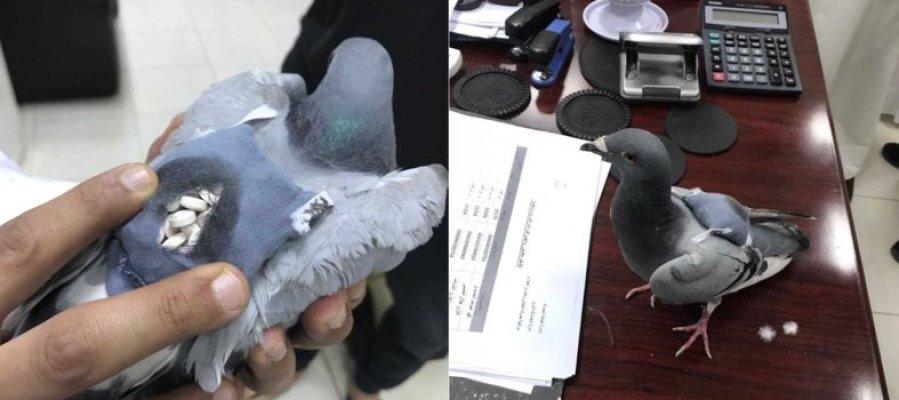 Capturan a una paloma mensajera que llevaba escondidas 178 pastillas de éxtasis
