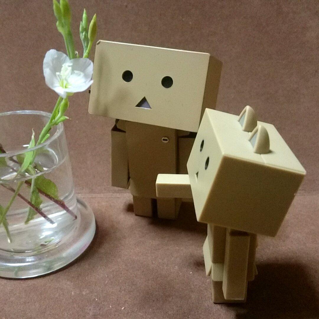 ユウゲショウ(夕化粧)と言う名前らしいです夜のお仕事かい?#ダンボー#ニャンボー#にゃんぼー#ダボニャ#花#flower