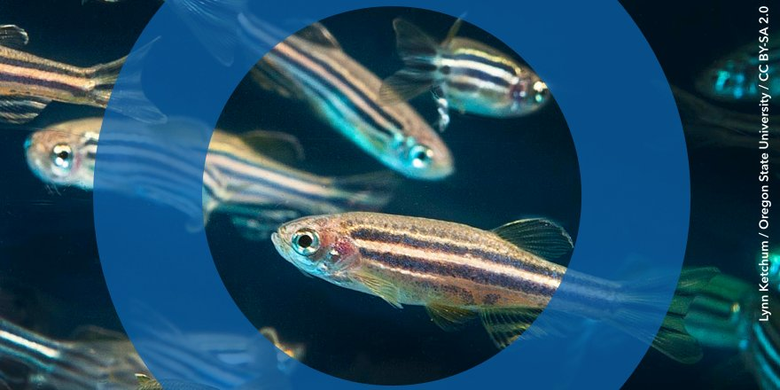 test Twitter Media - Animals from fish to humans have oxygen sensors, but their evolutionary origins are only just becoming clear https://t.co/Ixn7aU69OL https://t.co/WP0LKR3J3s