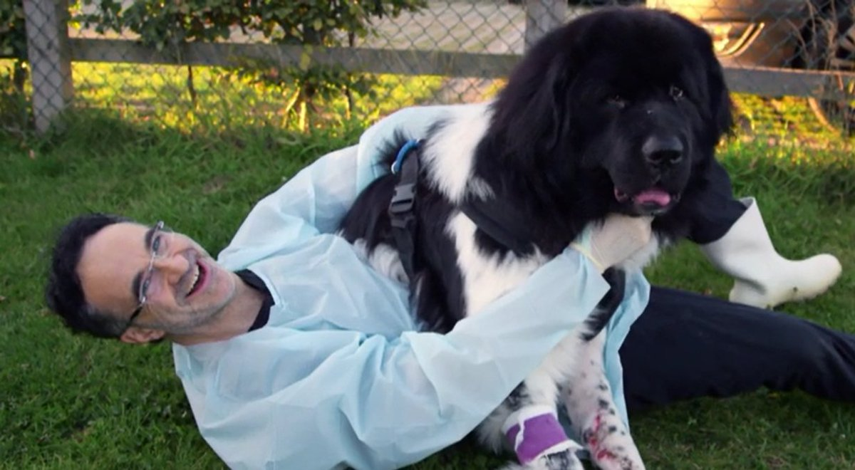Love moments like this, the moment patients become firm friends and extended family for life #supervet