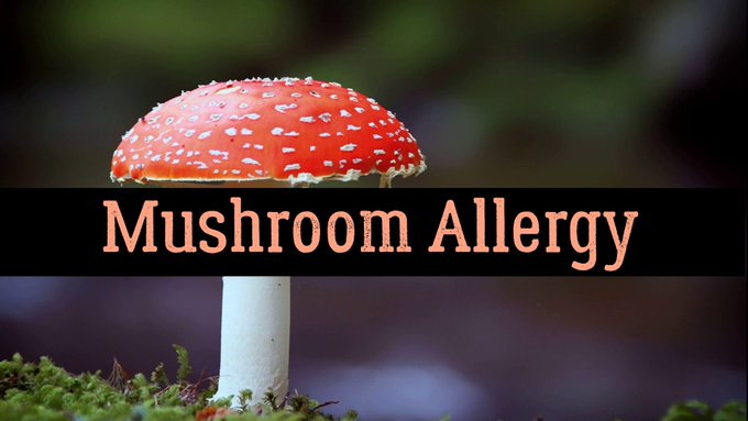 Mushroom #Allergy – Causes, Symptoms, Prevention, And Treatment https://t.co/HxB1ydPFEV https://t.co/1G2pUJg9wX