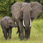 #ShockWildlifeTruths: Namibia flouts international law to export baby elephants
