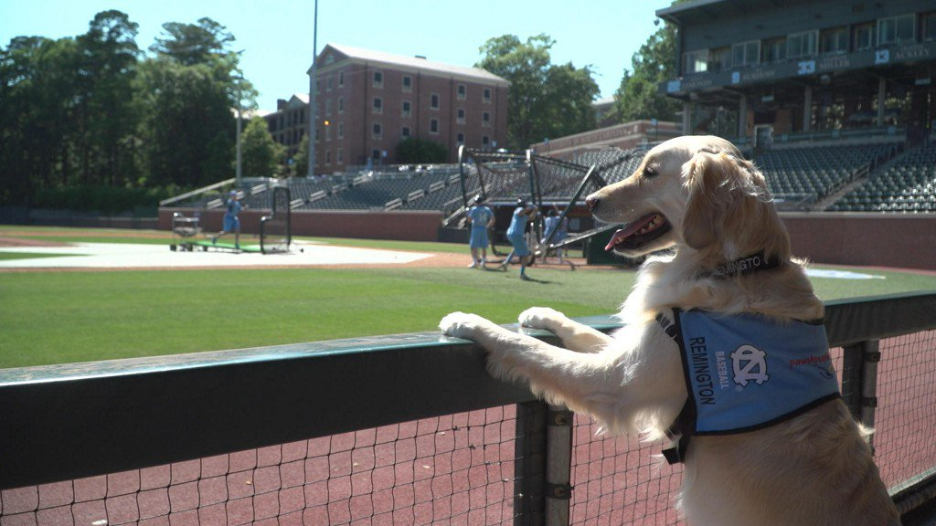 University of North Carolina baseball introduces team service dog and it's a total home run