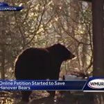 Online petition started to save bears in Hanover
