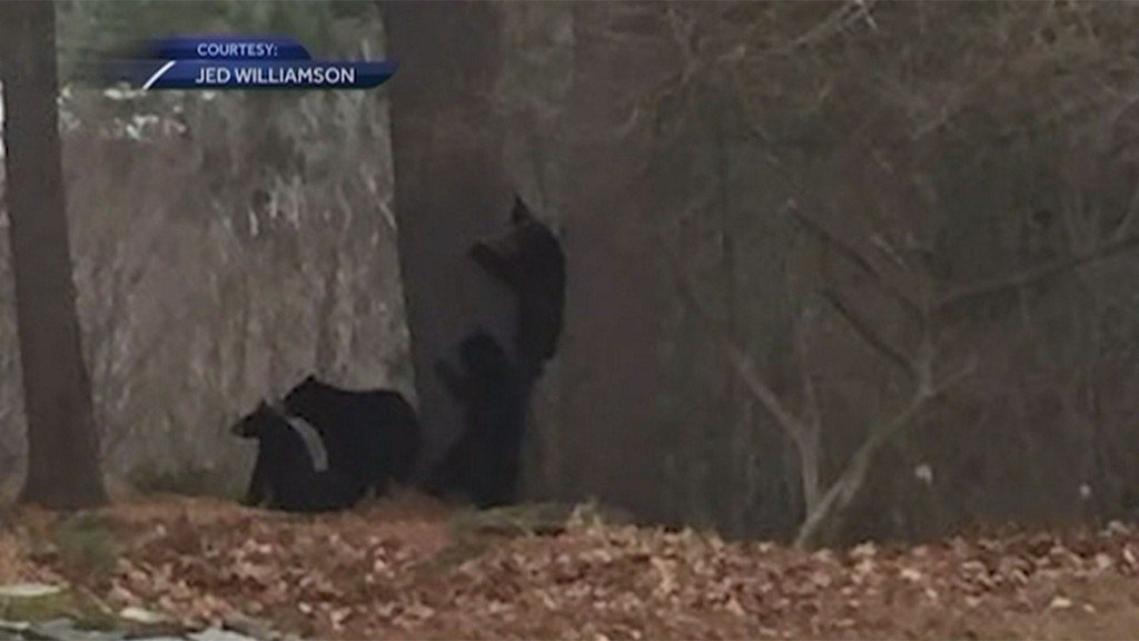 Wildlife officers to trap, relocate family of bears seen in Hanover