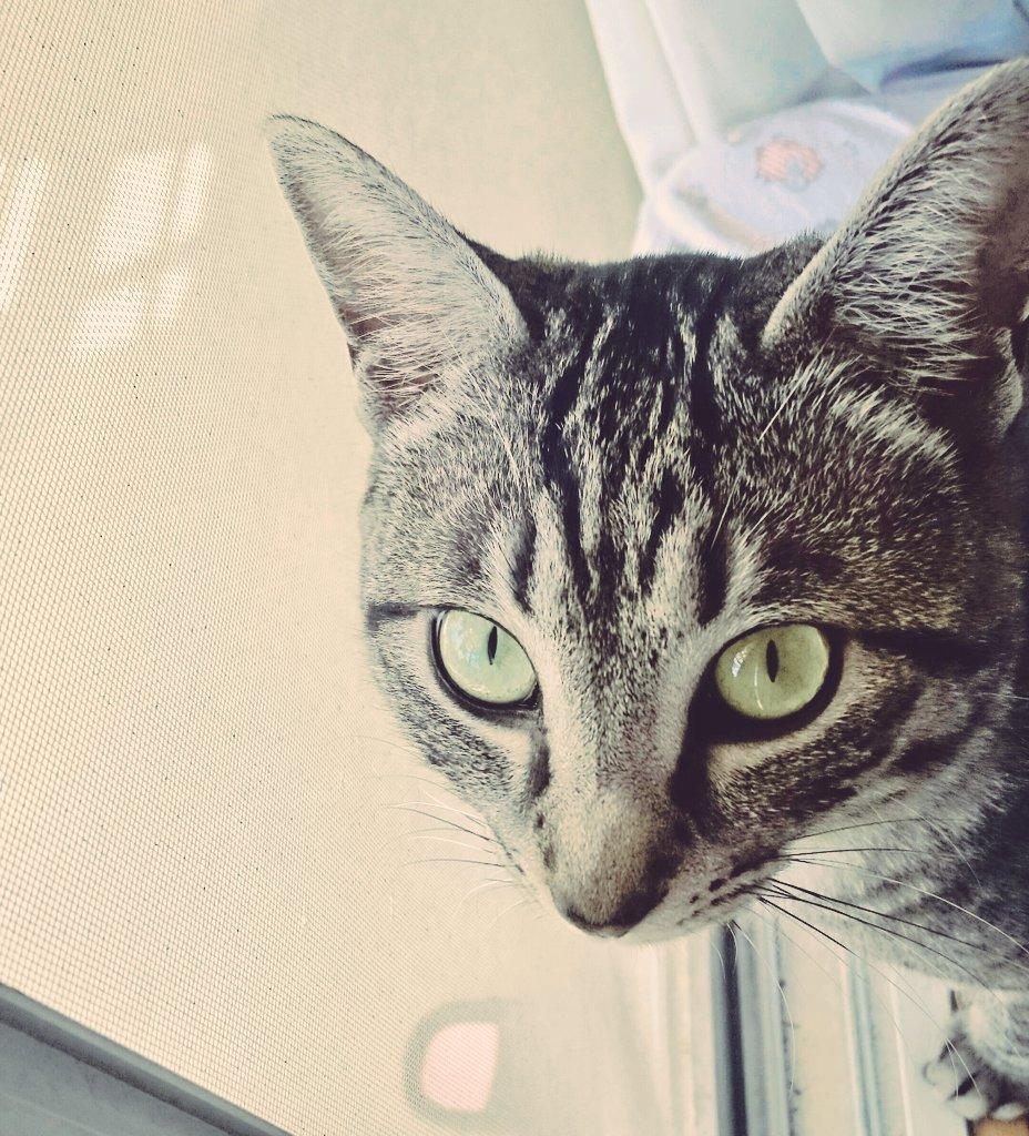 ンン〜♡この美猫め〜♡かわいいじゃ〜♡