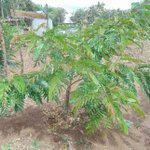 The greening of Kenya, schools play their part