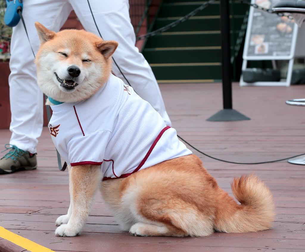 test ツイッターメディア - 【速報中】西武連勝なるか?楽天が止めるか? Koboパークに遊びにきた柴犬まるも試合が気になりますね https://t.co/6cQcoSGiYA https://t.co/fZ541iYeG7