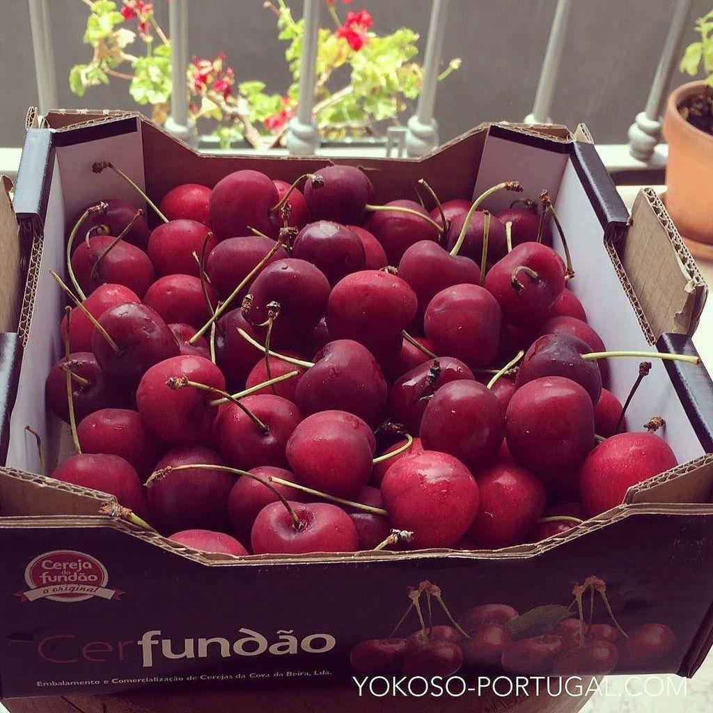 test ツイッターメディア - ポルトガルはただ今さくらんぼの季節です。カステロ・ブランコの北部に位置するFundaoは、さくらんぼが名産です。 #ポルトガル https://t.co/1d3I7NTMTI