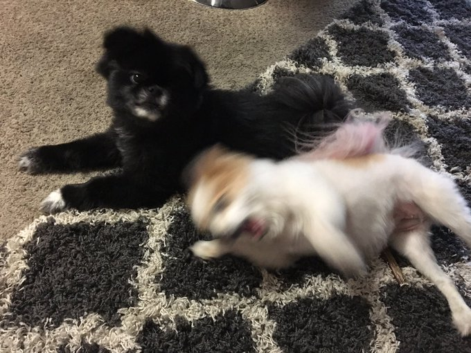 3 pic. these doggos are goofy af! https://t.co/REP6g8SQ89