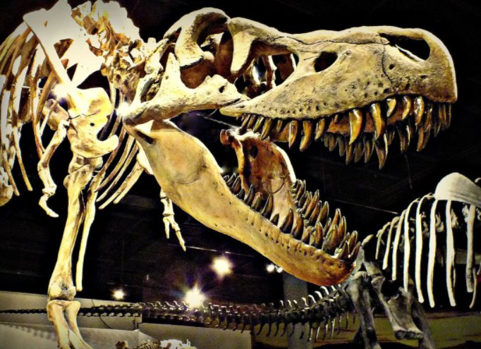Educational fun for all ages: Dinosaurs, ancient cultures and Southwest history