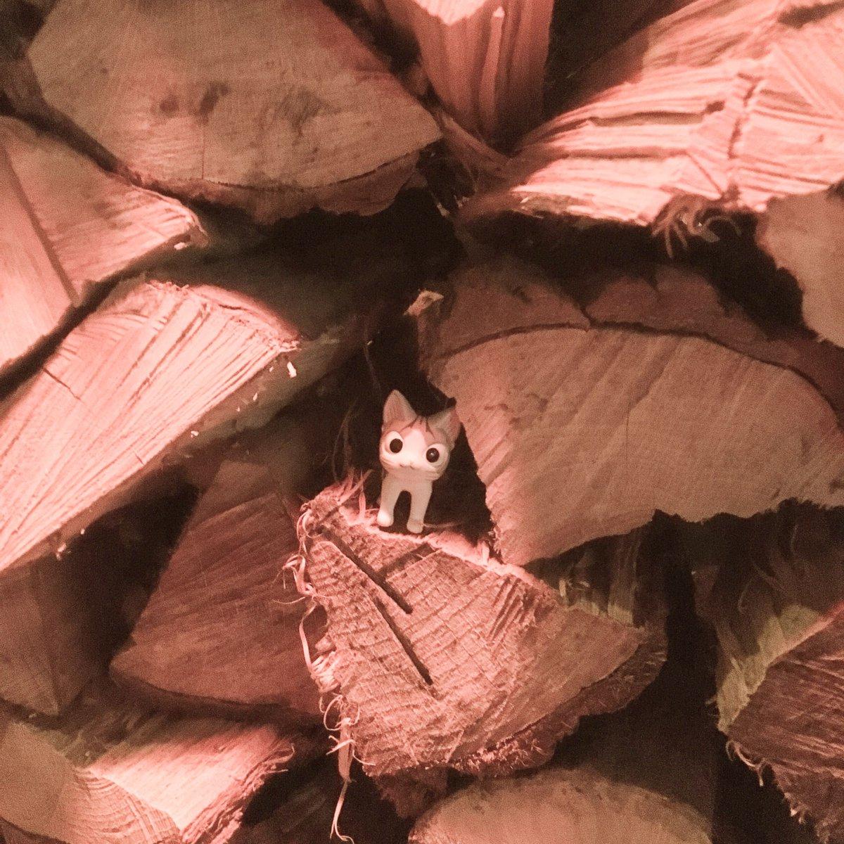 一面のかつおぶしかと思ったら、ぜんぶ木らったんらー! チー、しょっくれすー!#こねこのチー #チーズスイートホーム #チ