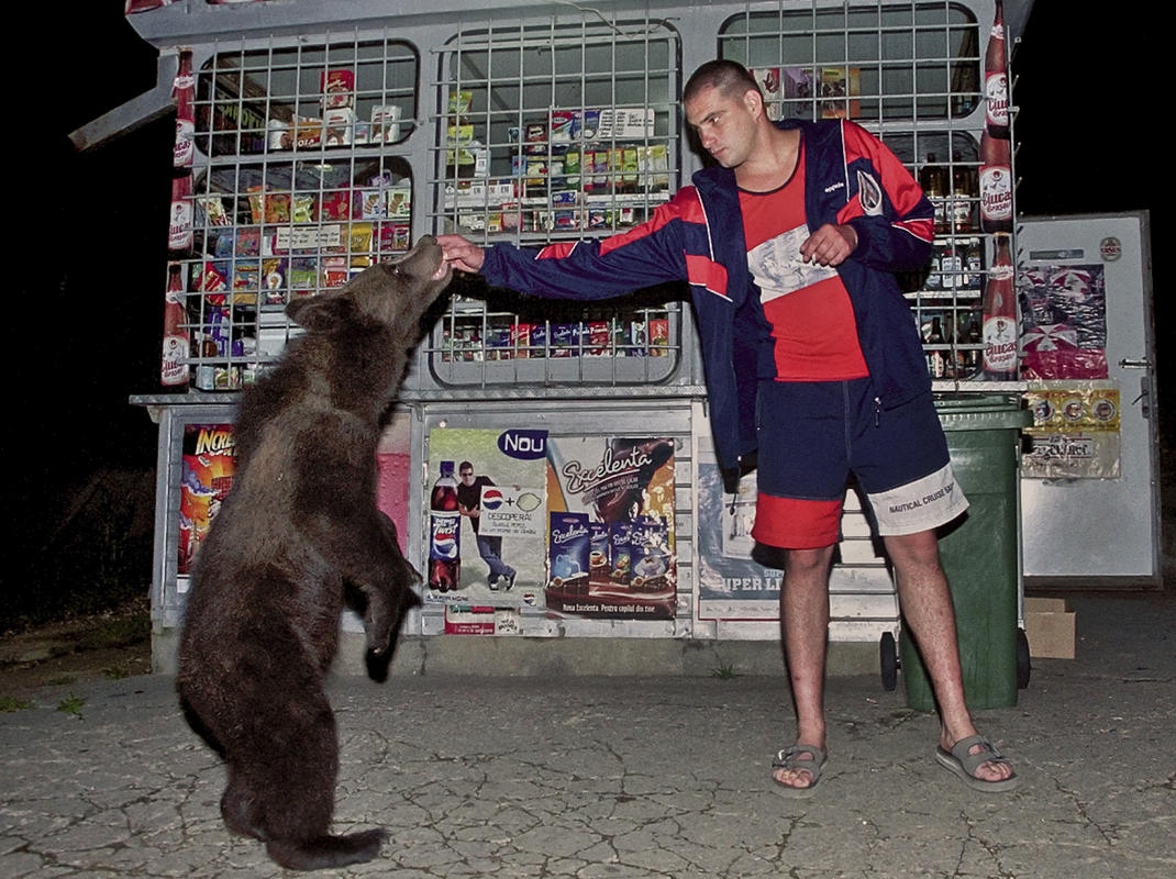 protective mama bear, cubs cut off Dracula's castle