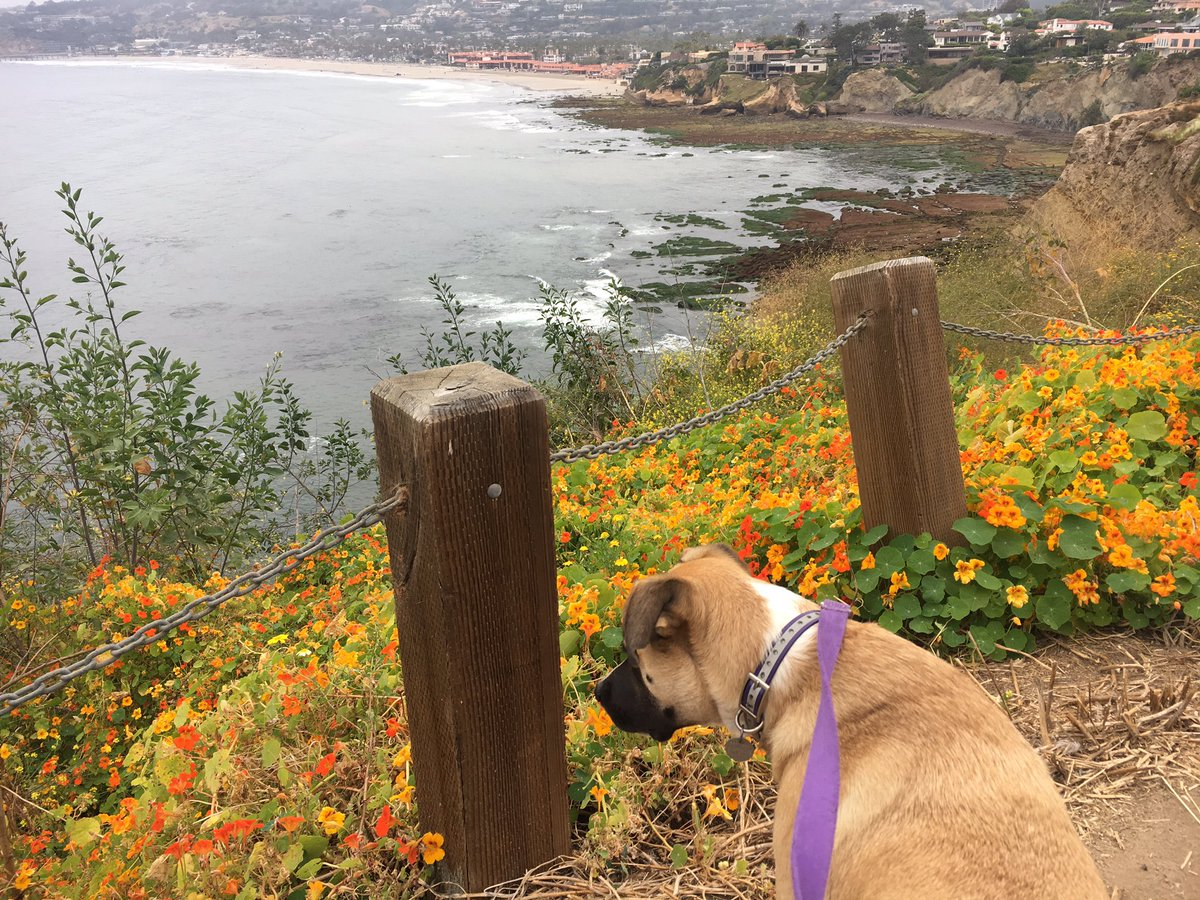 test Twitter Media - Morning jog with my dog! @brooksrunning #runhappy #sandiego #lajolla https://t.co/9mEF8Fm2m4