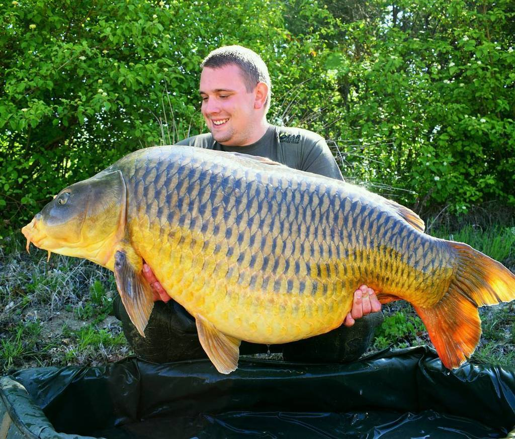 #carplife #carpfishing #carpdiem big summer <b>Common Carp</b>. https://t.co/j16Jnc2Ath