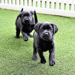 Here are the 2 guide dog puppies named after the 2017 Boston Marathon winners