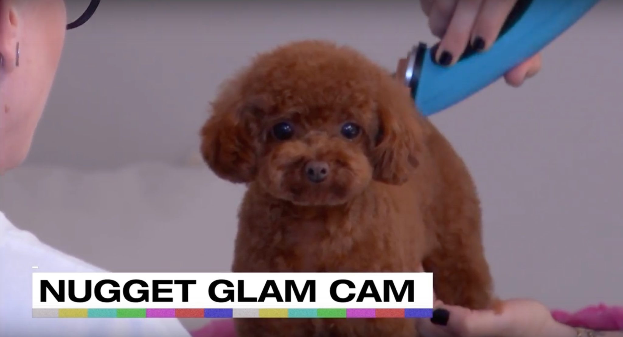Nugget is also looking to be a @COVERGIRL #KPWWW #TeamKP https://t.co/ZkpJOVib45