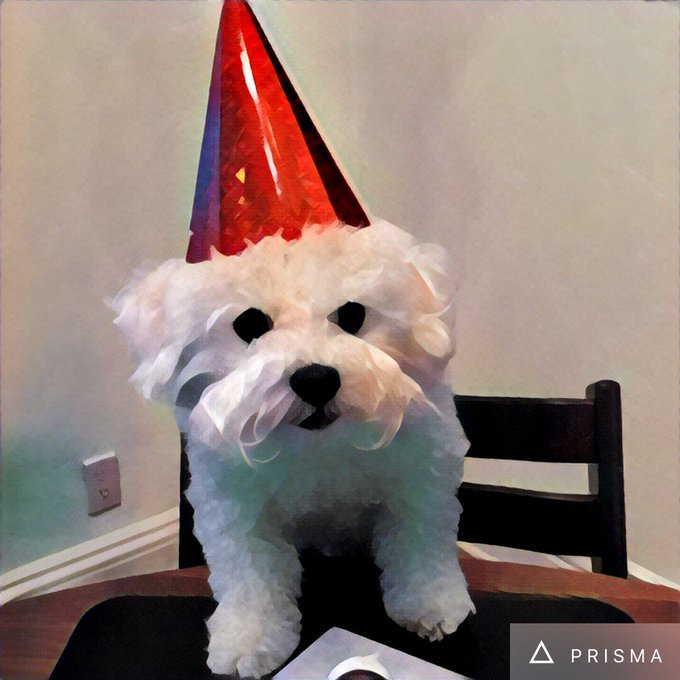 Happy Birthday from my dog Anderson Cooper!