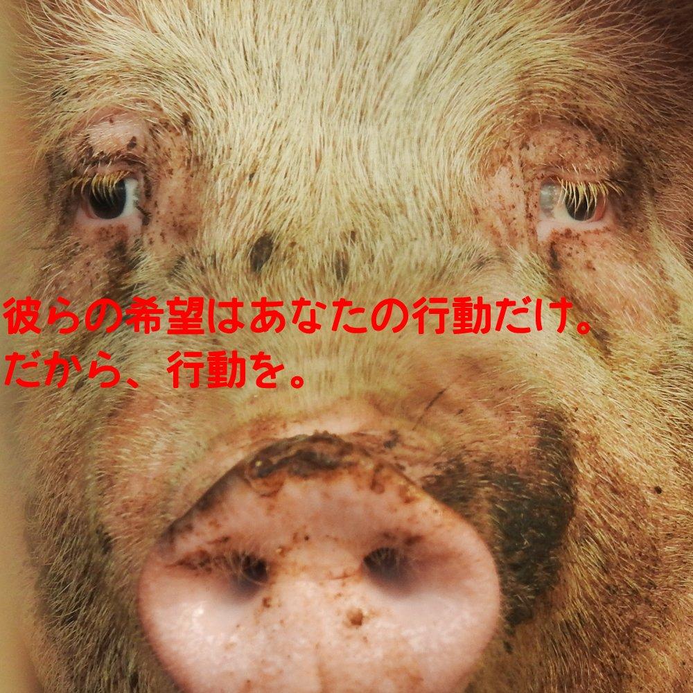 パペットマペット 畜産家 ちく 言いがかり 卑怯者に関連した画像-06