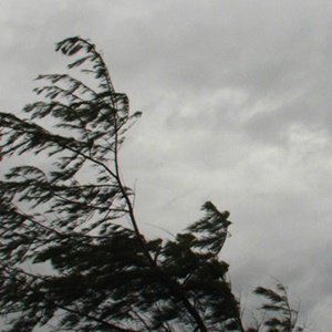 Cape of Storms: Eastern Cape warned to brace for 100km/h wind backlash