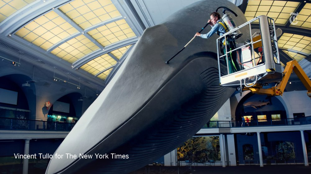 How the Natural History Museum cleans its blue whale