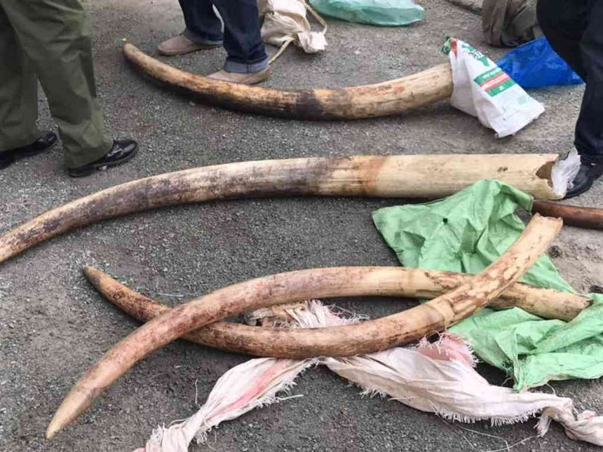 Ivory worth Sh12 million seized in Mariakani, three arrested