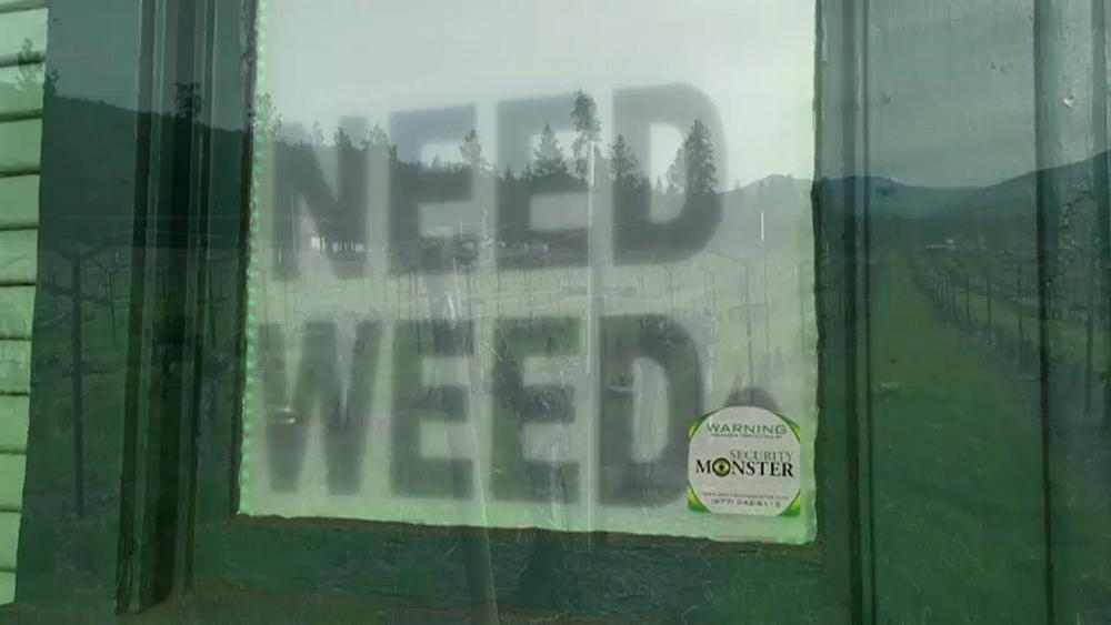 Oregon winegrowers diversify into marijuana