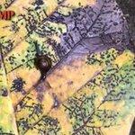 Snail makes itself at home on beautiful dead leaf at Jln Bukit Merah