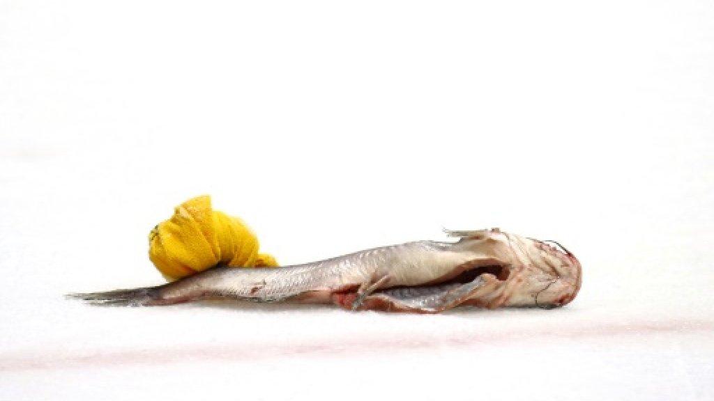 NHL Predators coach calls for freeze on catfish