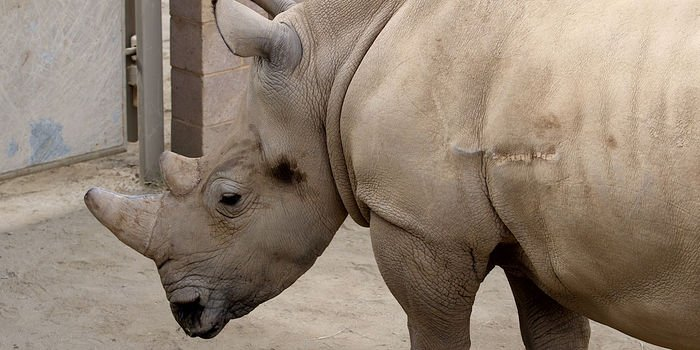 Rule No. 1 When Making #BabyRhinos : Try Not to Get Squashed  https://t.co/VVudhJ73aU by @WSJ https://t.co/lstFE6lP4B