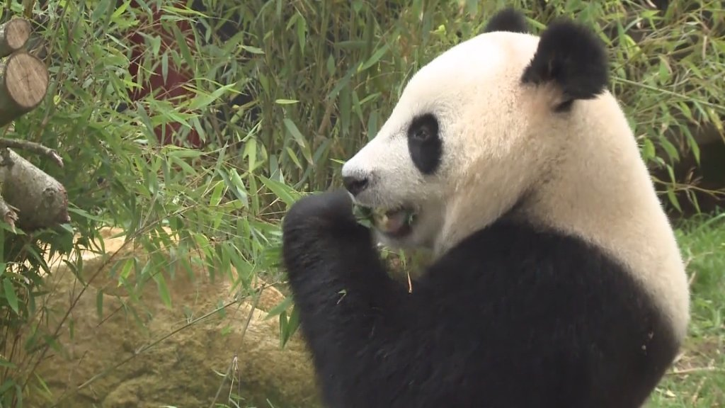 "ACCESS ASIA - The ""soft power"" of the panda"
