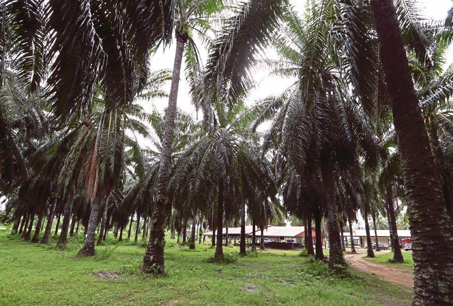 M'sia lauds Belgium's €1 million penalty for palm oil defamation