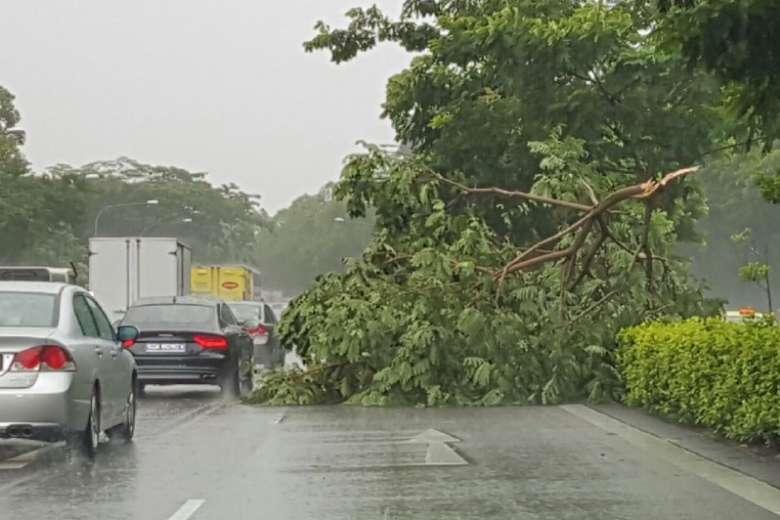 Tree blocks PIE amid heavy rain on Friday morning