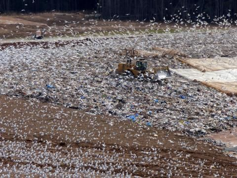 Trash-picking seagulls poop hundreds of tons of nutrients.  https://t.co/Oub8x63Txd https://t.co/QseQmjZwG4