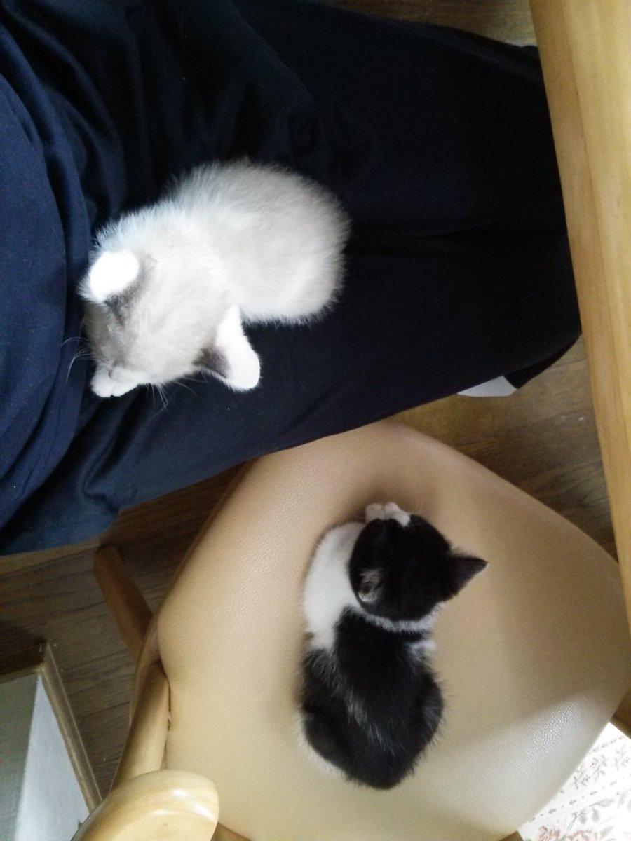 おはようございます。ふと思って…隣の椅子に、ニャル子以外のネコが座ってる。気付けば、なんだかネコだらけ。確か猫が苦手だっ