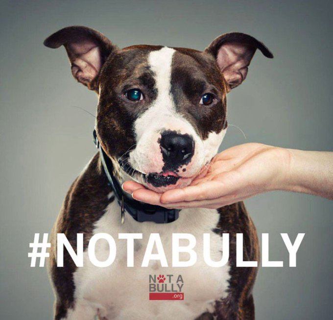 RT @Berti_and_Ernie: Pitbulls are lovers, NOT fighters. #NotABully https://t.co/bBzxyTpJb0