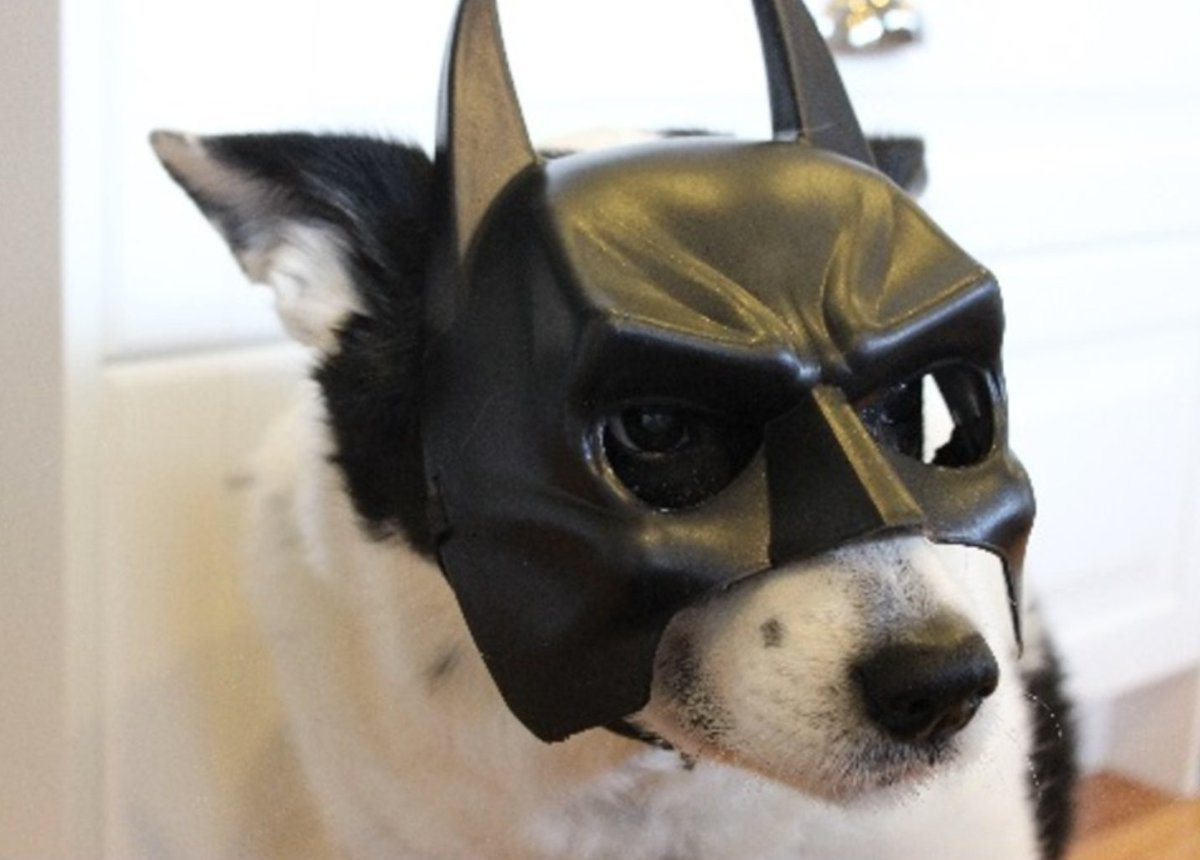 Film your dog out on a walk. Batman mask optional.  https://t.co/VLOkgWiwUe https://t.co/ynfJIse6x6