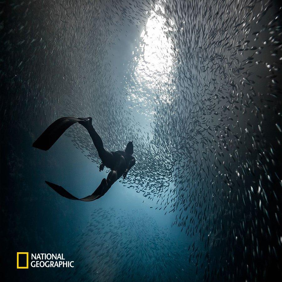 #NG오늘의포토 남태평양 중부에 있는 나라 통가의 바바우섬에서 만난 바다입니다. 깊은 바닷속 어둠과 대비되는 바다 위의 빛은 물고기들을 마치 별처럼 보이게 만들죠. 별 사이를 자유롭게 유영하는 다이버는 특별한 하늘을 경험합니다. https://t.co/23E7aVnVwg