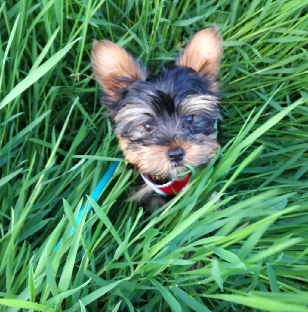 Film your next dog walk. ????  We need your video footage!! (Explanation: https://t.co/NGdgekiAmu) https://t.co/tSPI999WjO