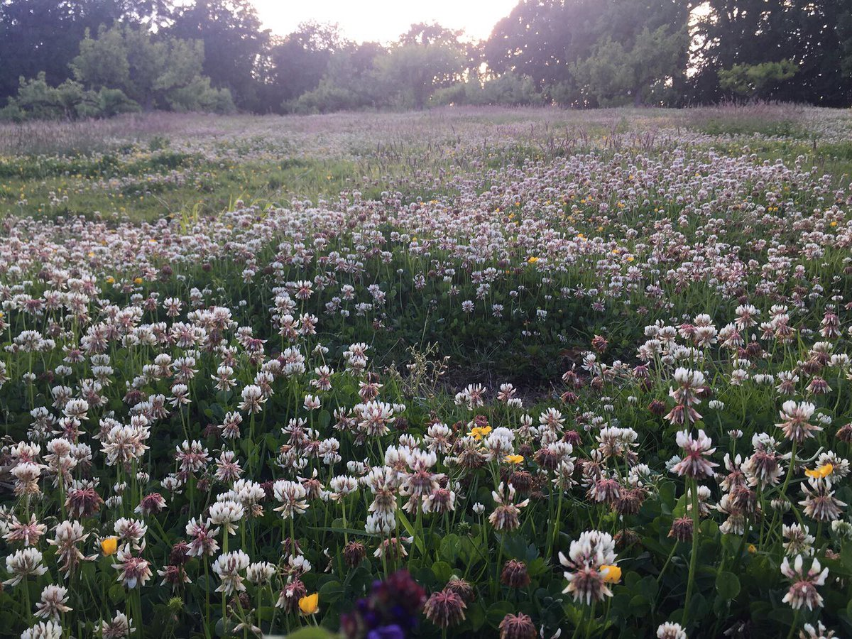 My Wild Flower Meadow This Evening ????????????❤️???????????????????? https://t.co/zh0zxo3dmH